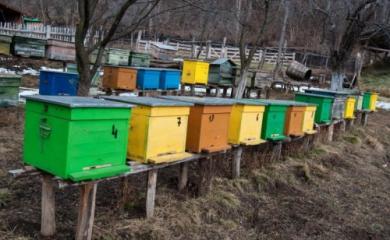 Se fura si stupi de albine.