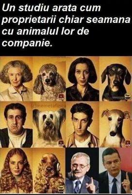 Studiu animal de companie stapan.