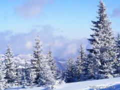 Iarna frumoasa